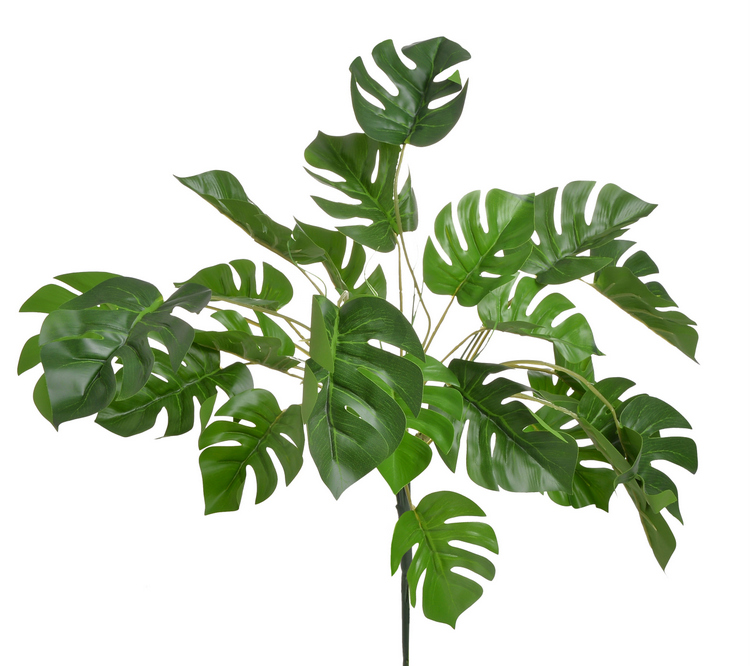 Filodendron monstera